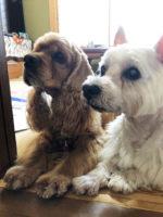 愛犬と幸せに暮らす家完成見学会